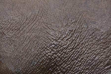 ungulate: Asian elephant (Elephas maximus). Skin texture.