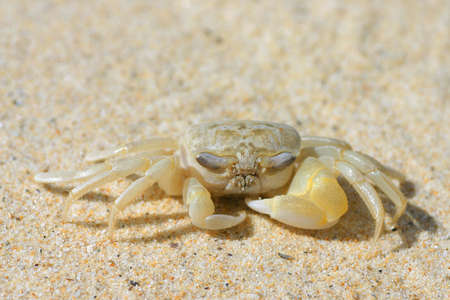 A close up of a  crab on a sandy beach