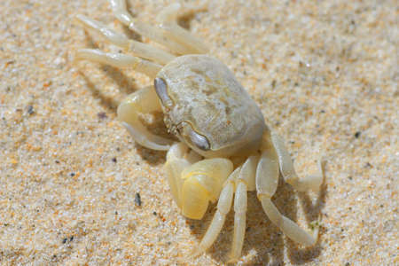 Close up of crab on a sandy beach