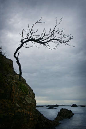 Twisted tree on a rocky shore