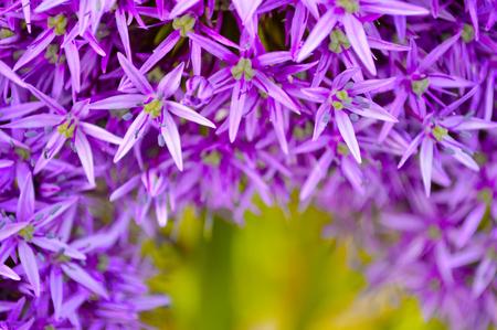 Queen Elizabeth Park Vancouver BC Canada Stock Photo