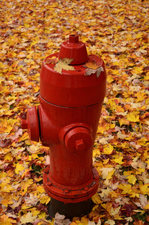 fire hydrant: Fire hydrant.  Fallen leaves. Autumn leaves.