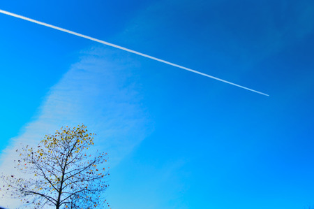 contrail: Contrail and Autumn leaves.