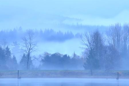 Fog. Mist landscape. forest.