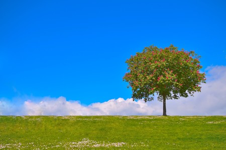 A tree on a hill