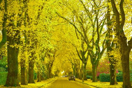 Autumn. Quiet Residential Area Stock Photo