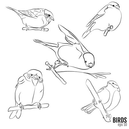 bullfinch: birds of Europe: sparrow, tit, bullfinch Illustration