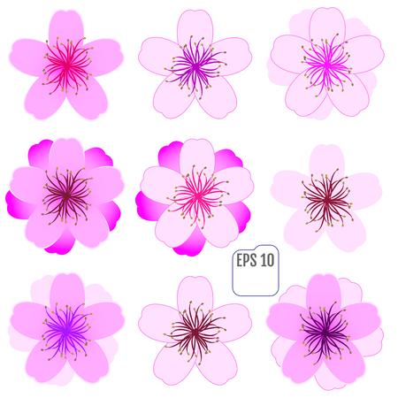 Sakura flowers set , cherry blossom