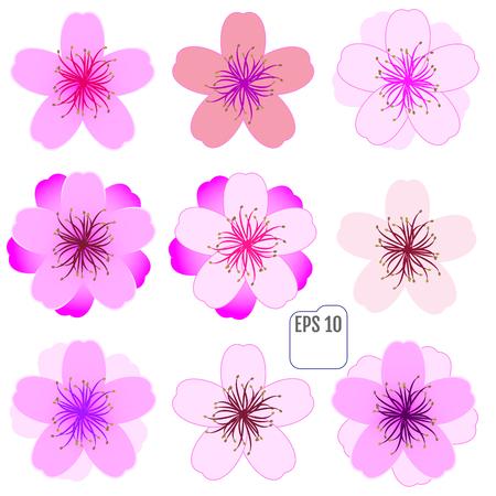 Cherry blossom icon set. Vector Illustration