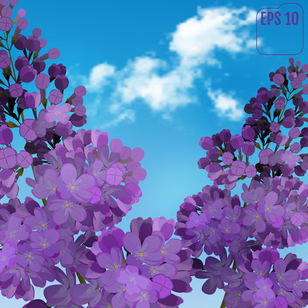 Blooming violet lilac flowers - floral background with blue-sky and light white cloud. Vector greeting card Illustration
