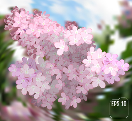 Spring flowers. Gentle fragrant branch of pink lilac. Vector illustration. Illustration