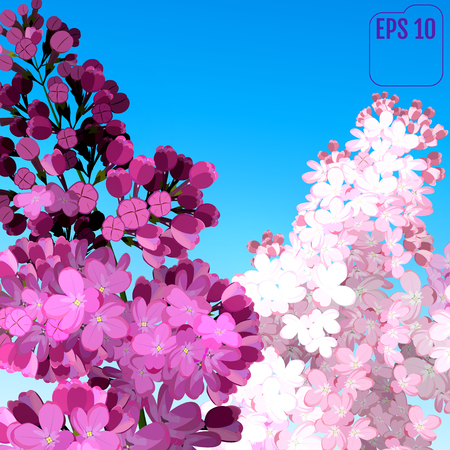 Sweet Lilac on the blue-sky background. Vector Lilac flowers, blue-sky. Two branches with summer lilac flowers. Summer time concept Illustration
