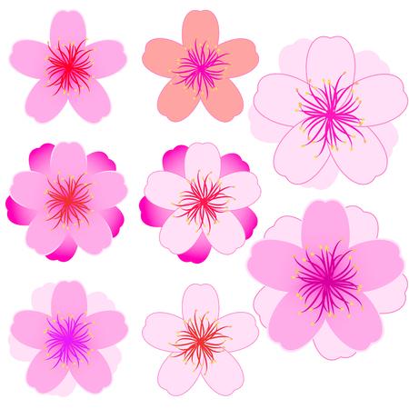 Cherry blossom icon set. Modern Vector illustration Illustration