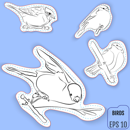 Fashion patch set, badges with european birds. This illustration can be used as a developing printing for children, applications, coloring books and more. Vector