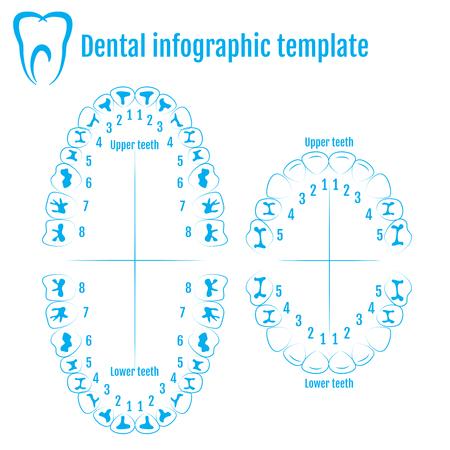 Teeth Numbers Vatozozdevelopment