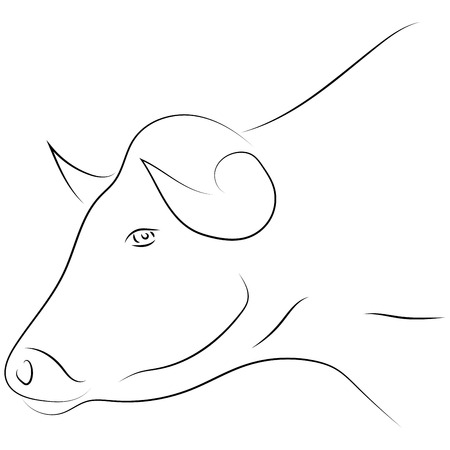 Black line bull head on white background. Hand drawing vector. Sketch style graphic animal.