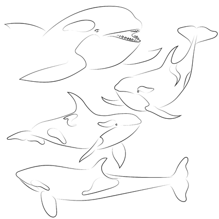 Set of black line killer whale on white background. Hand drawing vector. Sketch style graphic animal.