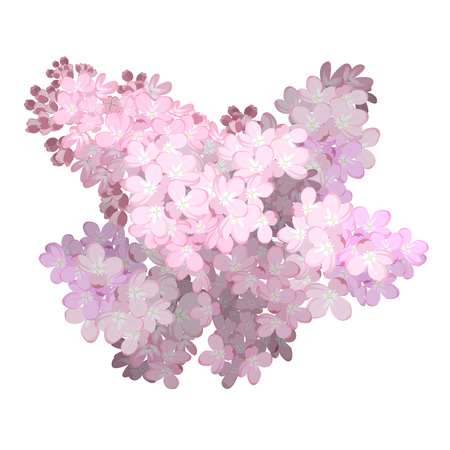 Spring flower, twig pink lilac. Syringa vulgaris. Buds and lush inflorescences of lilacs. Vector Illustration