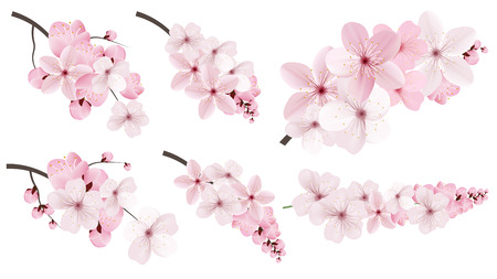 Beautiful blossoming dark and light pink sakura  flowers. Set of realistic flowering cerry branches. Vector illustration
