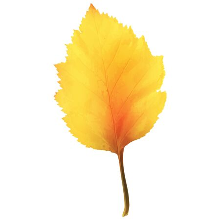 Realistic Alder Tree Leaf in Changing Fall Colors Isolated on White Background Vector Illustration