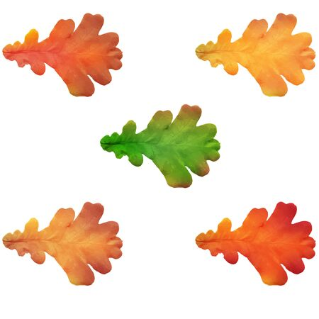 Set of realistic autumn oak leaves. Oak leaves isolated on a white background. Autumn concept. Vector illustration.