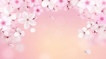Blossoming light pink sakura flowers. Realistic cherry flowers