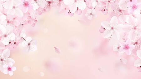 Blossoming light pink sakura flowers. Realistic cherry flowers