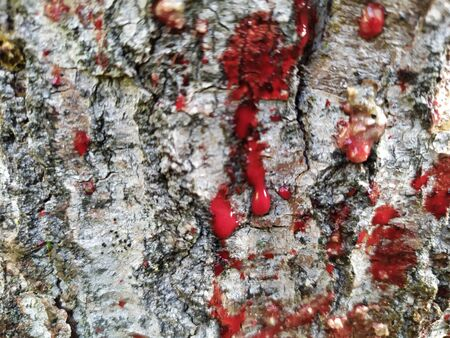 Blood splatters on surface tree wood background. Realistic blood.  Background for Halloween