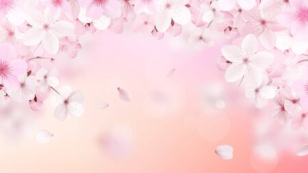 Blossoming light pink sakura flowers. Beautiful print with place for text. Realistic cherry flowers. Vector illustration. 向量圖像