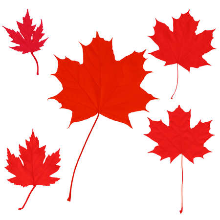 Canada Day maple leaves background.