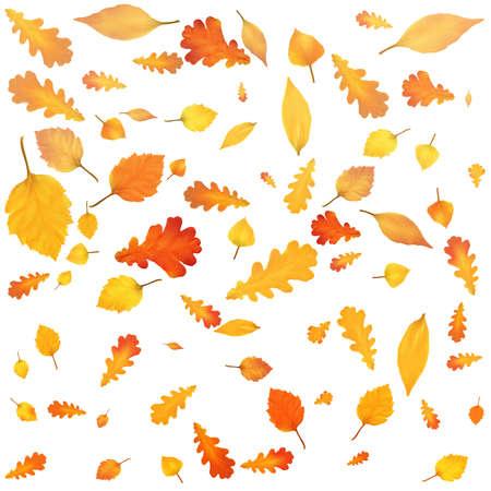 Gold Autumn background. Golden maple and oak leaves. Vector Illustration