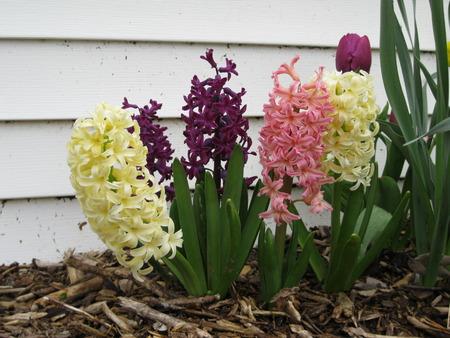 Spring Flowers Banco de Imagens