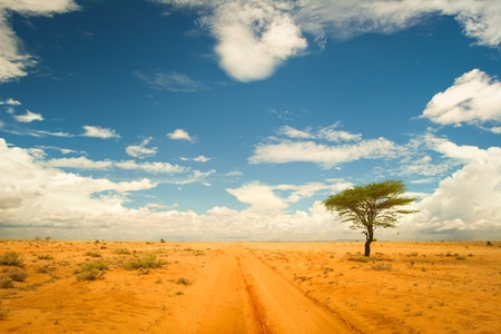date tree: Lonely tree in the desert