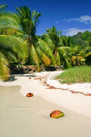 The beach in paradise island Moorea, French Polynesia