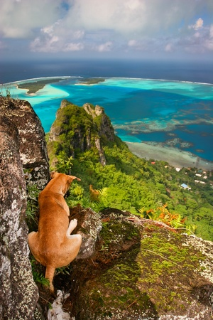 Dog on the steep mountain, Maupiti, French Polynesia