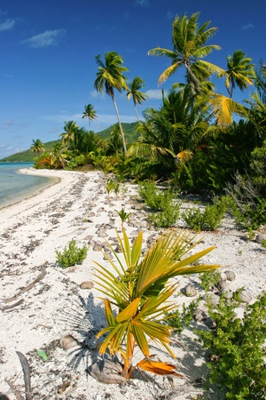Wild lonely tropical beach on Maupiti, French Polynesia, Society Islands photo