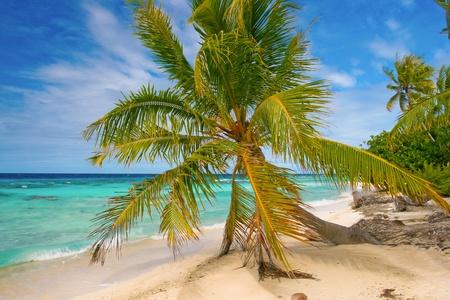 Palm on the beach, French Polynesia photo