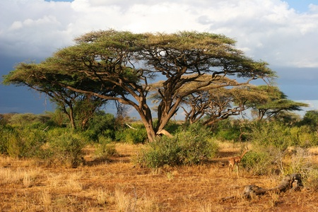 samburu: Landscape of Samburu before storm, Samburu, Kenya  Stock Photo