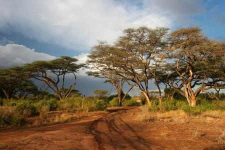 game reserve: Landscape of Samburu before storm, Samburu, Kenya  Stock Photo
