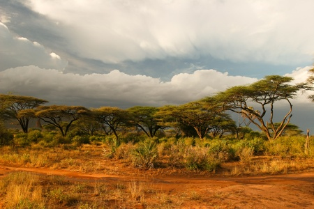 maasai mara: Landscape of Samburu before storm, Samburu, Kenya  Stock Photo