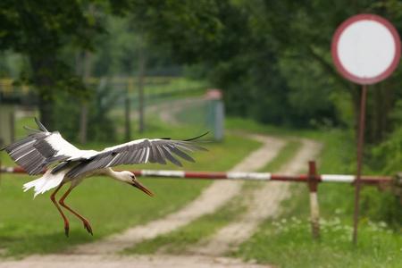 Landing bird, stork, Reserve South Poland