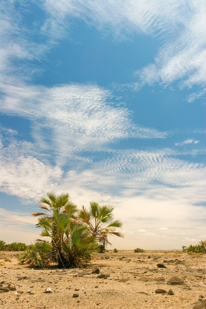 View of landscape with date palms in the background, Kenya  Stock Photo