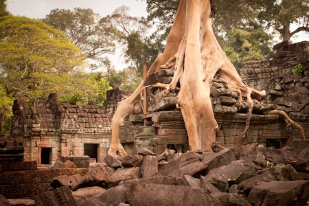 Root of the tree absorbing the ruins of the Temple