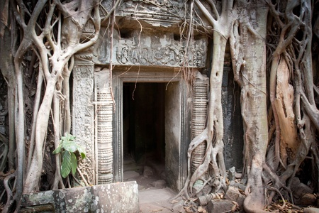 Entrance to the ruin of the temple covered by root of the tree, Angkor Wat, Cambodia  Stock Photo