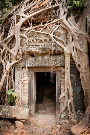 Entrance to the ruin of the temple covered by root of the tree, Angkor Wat, Cambodia Stock Photo - 13335683