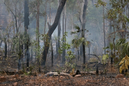 Bush fire in Kakadu National Park, Australia Stock Photo
