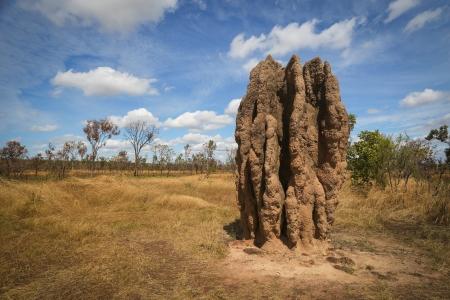 Termite mounds, Kakadu National Park, Australia
