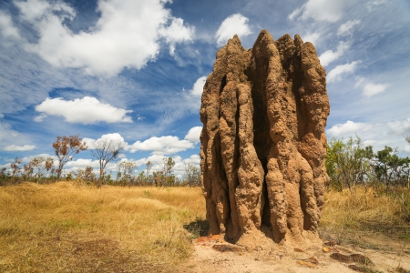Termite mounds  Nasutitermes triodae , Kakadu National Park, Australia Stock Photo