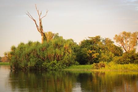 pandanus tree: Landscape of Kakadu National Park,Yellow Waters, Australia