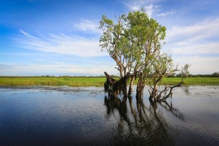 Landscape of Kakadu National Park,Yellow Waters, Australia photo